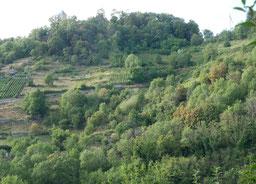 Ansicht des verbuschenden Schloßbergs (Foto: G. Hagemeister)
