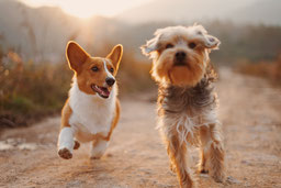 Hunde auf einem Spaziergang
