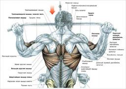 спина, мышца, широчайшие