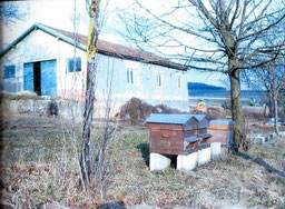 Les premières installations du rucher école du cercle Apicole Nord Meusien