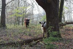 Hudewald in der Roheide (Foto C. Marien)