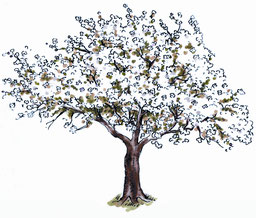 Der Apfelbaum, ein Frühlingsbote. Abbildung: NAJU/Ulrike Suckow