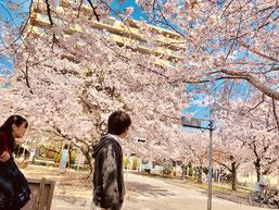 花見,東大阪,河内小阪,不動産,住家,すみか,sumika