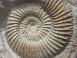 Fósiles de Jaen