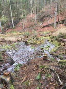 Erfolg Umwelt-Event, Kottelbachquelle, Quelle, Trippstadt, BUND, Wasserläuferprojekt