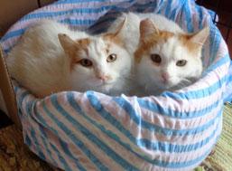 Pekka und Mirja