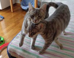 Money (Artemis) und Penny (Eos)