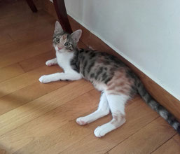 Areti (Pussy-Cat)