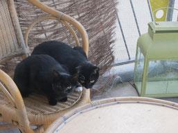 Hazel und Piwi