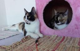 Petti jetzt Tiffi und Polli