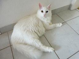 Albus (Flocke)