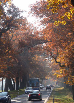 Eichenallee im Herbst, Richtung Norden