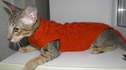 Оранжевый шерстяной свитер для кошки. Размер: длинна спинки 40 см, обхват грудной клетки 30 см