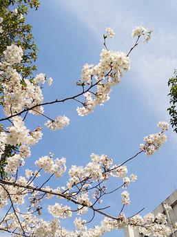 のぶおさん:中央区日本橋久松町(3/31)