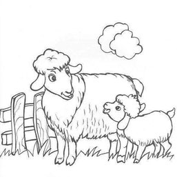 Naminiai gyvūnai ir jų jaunikliai