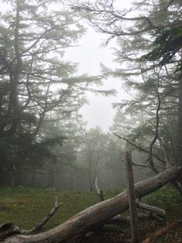 櫛形山からの眺望。。何も見えない。。。