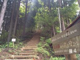 陣馬山山頂へ続登山道