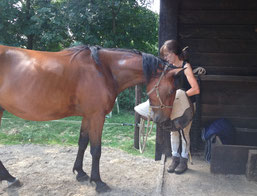 Het paard is betrokken en vol vertrouwen bij het opdoen van de barebackpad