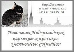 северное-сияние-кролики