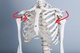 頚椎症・頸椎ヘルニアの原因