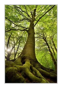 """Bildheizung """"Baum"""", 450 Watt, 60x90cm, hier mit Alurahmen silber matt, zum Vergrößern anklicken!"""