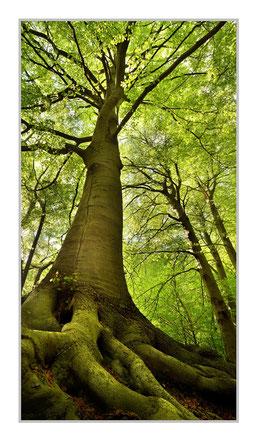 """Bildheizung """"Baum"""" 700 Watt, 60x110cm, hier mit Alurahmen silber matt, zum Vergrößern anklicken!"""