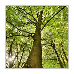 """Bildheizung """"Baum"""", 300 Watt, 60x60cm, hier mit Alurahmen silber matt, zum Vergrößern anklicken!"""