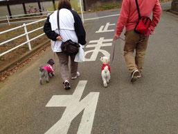 お散歩,レッスン