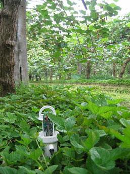sonde capacitive Enviroscan de Sentek : piloter votre irrigation avec Agralis