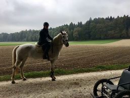 Ronja, das neugierige und sehr hübsche Pferd