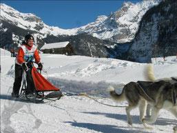 Schlittenhunderennen Kandersteg 2013