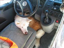 Turbo-Schlaf zwischen den Fahrten