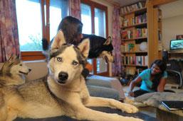 Ein Jahr/ein Hund/ein Bild