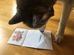Zuerst öffne ich diesen hübschen Brief...