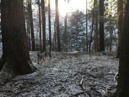 Unser Zwerg zieht durch einsame Wälder...