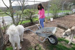 Noemi beim Graben; ob ihr Blizzi wohl helfen will?