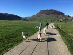 Mit Nele und Ajak, meinem Rudel und Lina und Natalie auf der Schmidenmatt oberhalb Günsberg.