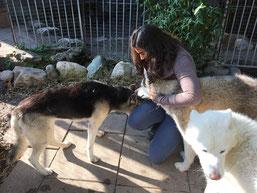Kuschelüberfall auf Doghändlerin Noemi