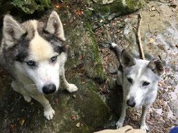 Yukon und Rainey