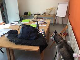In der Hunde-Physiotherapie-Ausbildung