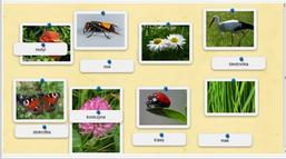 gra - nazwy mieszkańców łąki - wersja łatwiejsza