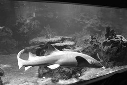 Foto: SHARKPROJECT Germany e. V., Heusenstamm