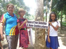 校庭に育った木に、何の木か分かるように木の名前 を書いた看板を付けました