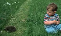 Kind im Gras schaut vorbeilaufendem Igel zu,
