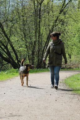 Hundetrainer Hund Hamburg Lohbrügge