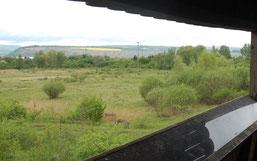 Vom Beobachtungsturm aus lässt sich nahezu das gesamte Gebiet überblicken. Esel helfen mit die Vegetation offen zu halten.