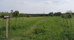 Der neu angelegte Pfad führt vom Parkplatz direkt in das Naturschutzgebiet