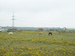 """Auf dieser """"Weide"""" wurden Pferde gahalten!"""