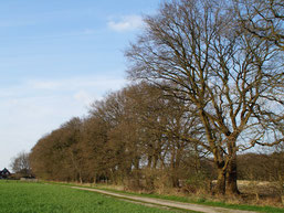 Der Eichenbaumbestand wird besonders in  4 Wochen wieder zum Blickfang der Umgebung