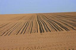 Occupation de sols en Beauce